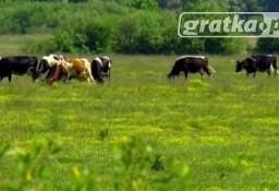 Ukraina.Grunty rolne.Fermy bydla,trzody,drobiu na sprzedaz,wynajem.