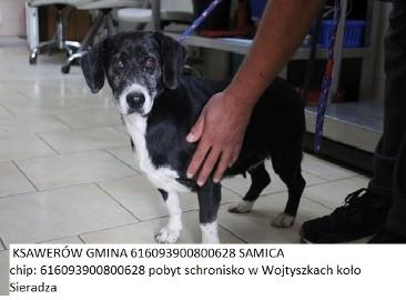 Pabianice - Ksawerów Zagubione Psy
