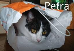 Inteligentna Petra szuka domu jako kocia jedynaczka
