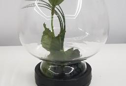 Kwiat w szkle z PRL-U
