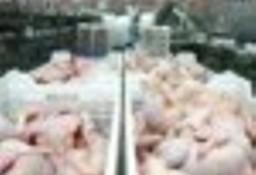 Ukraina. Mieso drobiowe, filet z piersi kurczaka 6 zl/kg, skrzydla 5 zl, udka 4 zl