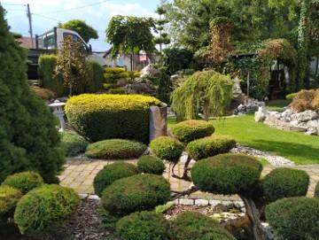 BONSAI , Bonsai do ogrodu , Nivaki , bonsai ogrodowe  ŚLĄSK