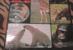 Encyklopedia Zwierząt Od A do Z