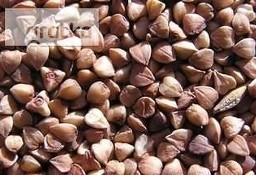Ukraina.Sprzedam gryke z upraw ekologicznych 2 zl/kg,kasza 3 zl/kg