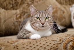 Spokojna, kochana, nieduża koteczka Mika szuka domu