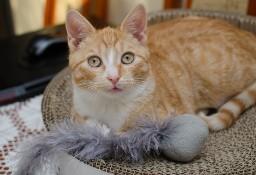 KOT: Piękny Rudy Zetor z Fundacji Miasto Kotów czeka na Ciebie