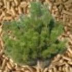 Ukraina. Surowiec drzew lisciastych i iglastych 15 zl/m3 do produkcji elementow europalet