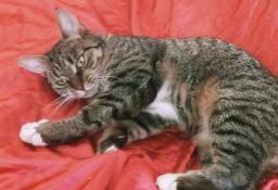 KOT: Psotka z Fundacji Miasto Kotów - kochana, spokojna i dojrzała, szuka swojego człowieka