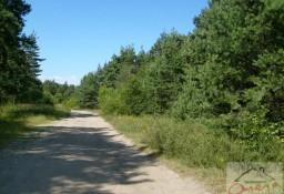 Działka leśna Podlesice