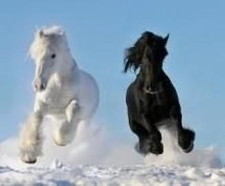 Ciezkie konie wlodzimierskie o duzej masie ciala w cenie zywca 3 zl/kg