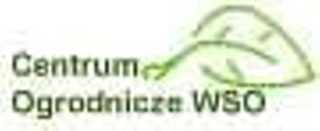 Clematisy, Cytryniec Jagoda Goi Warszawa Wawer