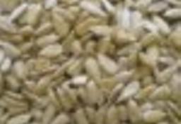 Slonecznik 1,5 zl/kg konfekcyjny od producenta. Soczewica zielona, olej