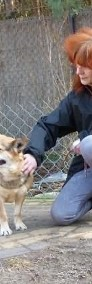 Rex wesoły energiczny psiak poleca się do adopcji-3