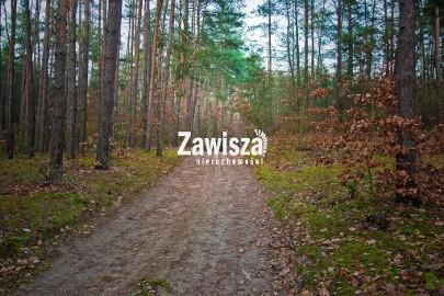 Działka leśna Młodzieszyn