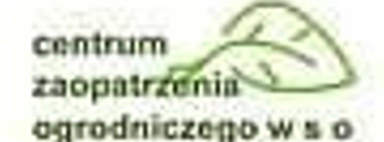 Pelargonie Warszawa-1