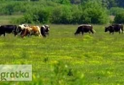 Ukraina. Gospodarstwo rolne z zabudowaniami na sprzedaz, wynajem