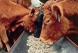 Ukraina.Krowy,jalowki,mleko 3,8%.Cena 0,90 zl/litr