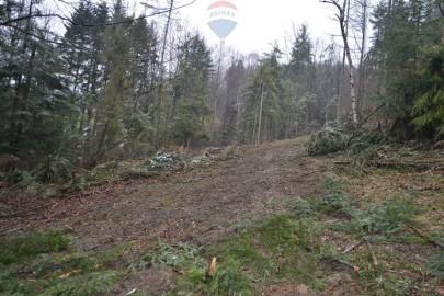 Działka leśna Żarnówka