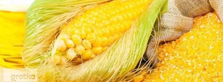 Sloma zbozowa,rzepakowa,lniana.Od 70 zl/tona.Grunty rolne,biomasa-1