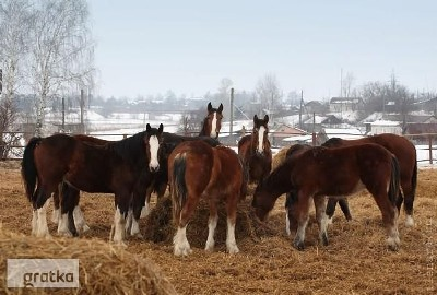 Ukraina.Pellety,brykiety drzewne, slonecznik,sloma,susz,otreby,sciolka