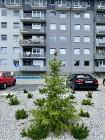 Mieszkanie na sprzedaż Wrocław Stabłowice ul. Wełniana – 55 m2