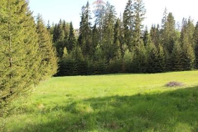 Działka leśna Nowy Targ