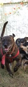 Psi ideał marzy o kochającym i odpowiedzialnym domku-3