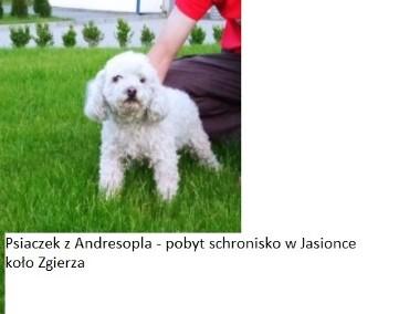 Znalezione ANDRESPOL-1