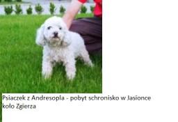 Znalezione ANDRESPOL