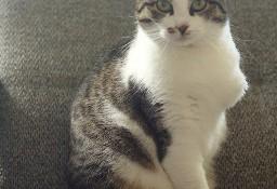 Cudna, młodziutka bezłapka Sonny :)