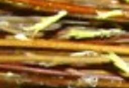 Ukraina.Wierzba 4 zl/m3,wiklina do produkcji celulozy,plyt.Gospodarstwo
