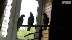 Odkupimy papugi,ptaki egzotyczne.