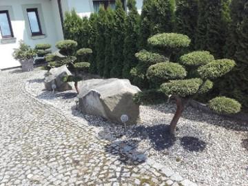Bonsai , Bonsai ogrodowe,krzewy formowane NIVAKI - Katowice , Gliwice , Zabrze , Mikołów , Żory, Pszczyna
