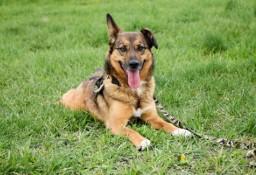 Cudowny psiak Bobi szuka domu