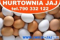 Sprzedaż Jajek,Jaj,Jaja-Masa Jajeczna-Poznań,Dopiewo,Buk,Opalenica