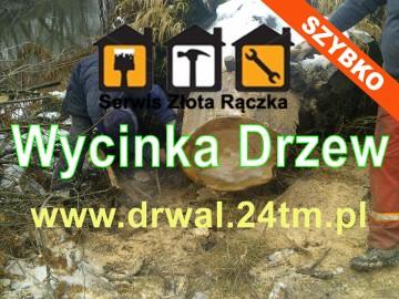 Wycinka Drzew - Cięcie Gałęzi - Wywóz - Poznań