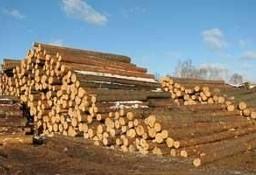 Ukraina.Wspolpraca.Drewno 15 zl/m3.Produkcja biomasy,pelletu,brykietu