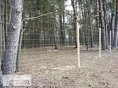 Siatka leśna/budowlana - 200/17/30 L 50mb ocynk-1
