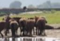 Ukraina. Konie 900zl, zwierzeta hodowlane, ogiery, klacze, siwe rysaki. Stajnia koni, koszary, stragi, gospodarstwo rolne
