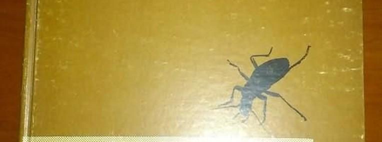 świat owadów Strojny-1