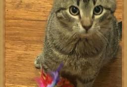 Porzucony, lubiący towarzystwo innych kotów, młody kocurek, szuka domu
