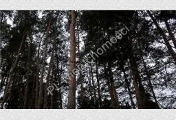 Działka leśna Nadarzyn