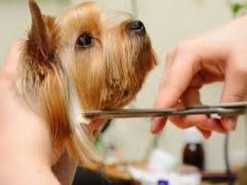 Kurs strzyżenia psów Kurs groomingu promocja 12dni- 4500zł ,6dni-2500zł