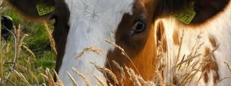 Ukraina.Zakladania prywatnego gospodarstwa rolnego dla obcokrajowcow.-1