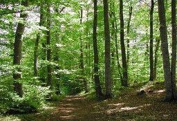 Las Łapanów