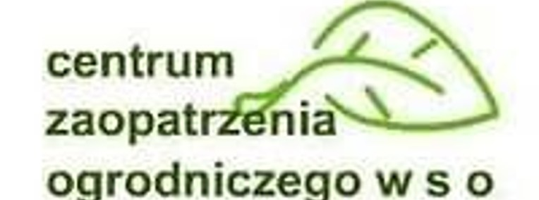 Dereń jadalny, Morwa Warszawa-1